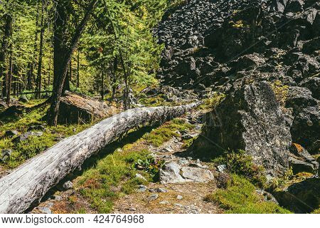 Beautiful Green Forest Landscape With Tree Trunk On Trailway Among Mountain Wild Flora In Sunshine.