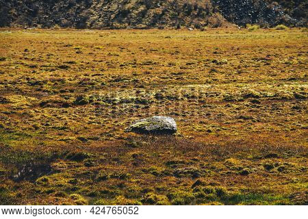 Minimalist Scenic Autumn Landscape With Mossy Stone Among Mosses On Moss Field In Golden Sunlight In