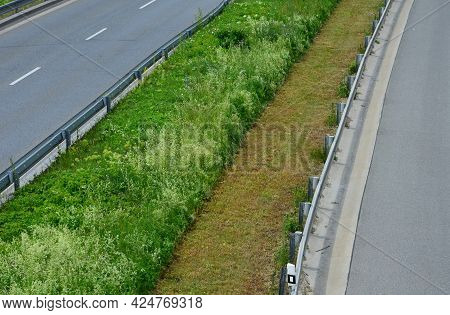 Lawn In One Half Uncut With Clover And In The Other Half Regularly Mown To A Low Stalk Height. The C