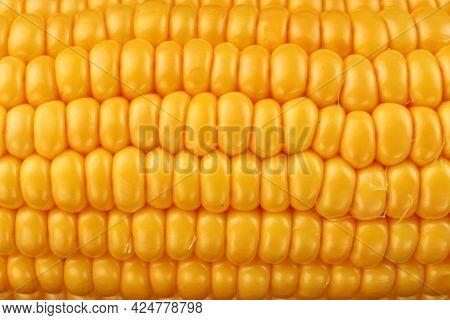 Corn Maize Cobs Closeup Texture Or Background