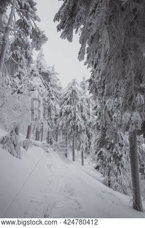 Beautiful Snowy Nature In Beskydy Mountains In Pustevny In The Czech Republic. Untrodden And Untouch
