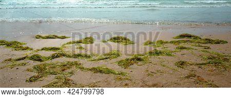 Beach Panorama. Panorama Of The Sea Beach With Seaweed. Sandy Beach With Seaweed.
