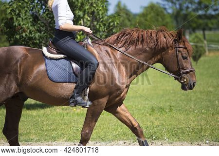 Pretty Girl In A Riding Gear: Bridle, Boots, Stirrups, Saddle