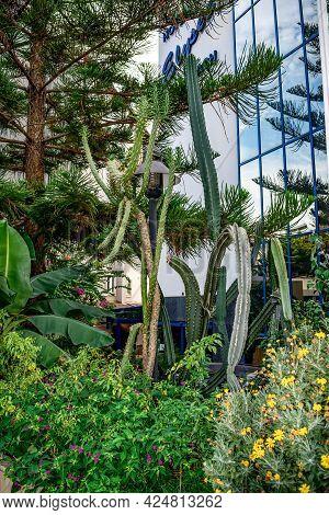 Alanya, Turkey - October 23, 2020: Tall Long Cacti And Araucaria Heterophylla Tree In The Hotel Gard