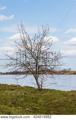 Vertical Photo Of Winter Apple Tree And Boat Tie Up Ring Near River Daugava Background Light Blue Sk
