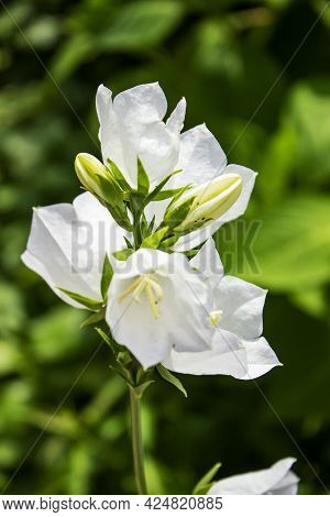 A Close Up Of A Flower.high Quality Photo