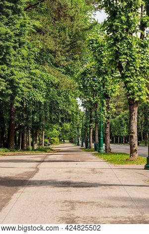 Alley In The Forest Park (mežaparks) At Summer. Vertical Photo Of Path In The Park Lined With High G