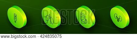 Set Isometric Line Digital Thermometer, Lungs, Gypsum And Human Kidneys Icon. Vector