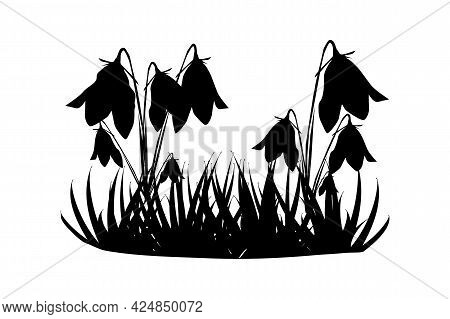 Silhouette Of Grass And Flowers Isolated On White Background. Meadow With Wild Herbs. Bluebells Grow