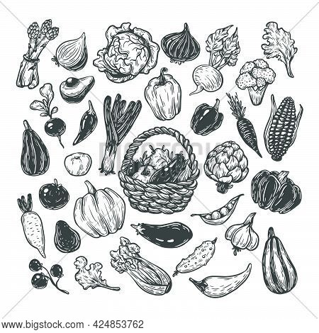 Hand Drawn Vector Set Of Vegetables. Big Vegetable Collection. Fresh, Natural And Vegetarian Food. S