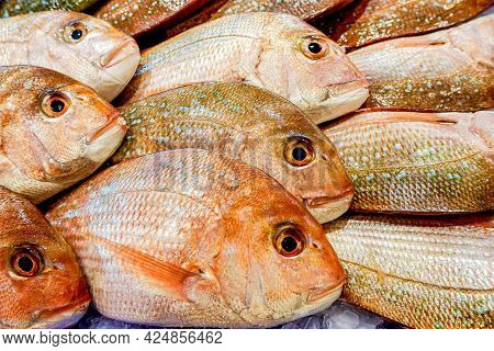 Pile Of Snappers On Display At Fish Market. Food Background