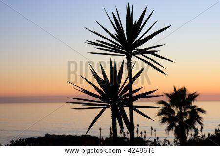 Beach Sunset Yucca Plant