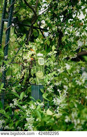 Bottle Of Water With Lemon And Lime Slices Stands On A Fence Near A Flowering Tree