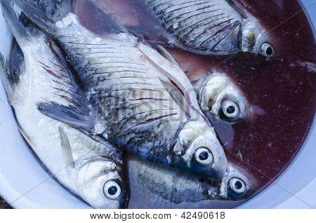 sterben Fische in thailand