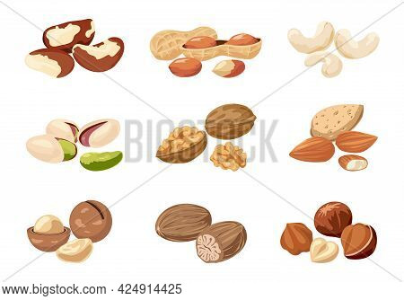 Nut. Cartoon Cashew And Peanut With Shells. Natural Nutmeg Or Macadamia. Delicious Walnut And Almond