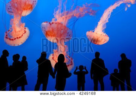 People Watching Giant Jellyfish In The Aquarium