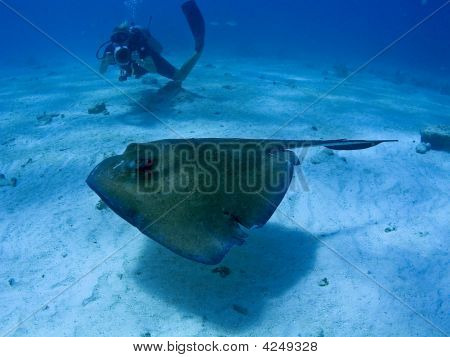Stingray And A Photographer