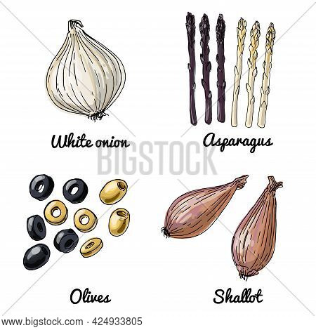 Vector Food Icons Of Vegetables. Colored Sketch Of Food Products. White Onion, Asperagus, Olives, Sh