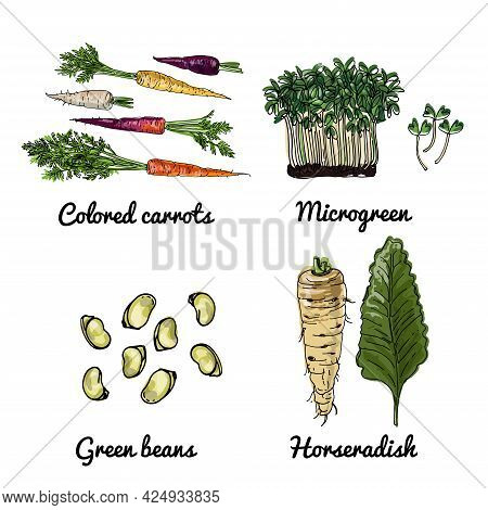 Vector Food Icons Of Vegetables. Colored Sketch Of Food Products. Colored Carrots, Microgreen, Green