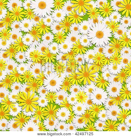 daisy flowers background