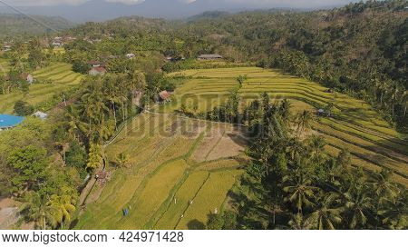 Aerial View Rice Fields, Terrace And Agricultural Land With Crops At Sunset. Aerial View Farmland Wi