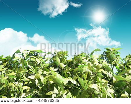 3D render of leaves on a sunny blue sky background