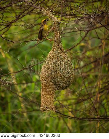 Bird Sitting On The Nest , Bird On Nest , Nature Background