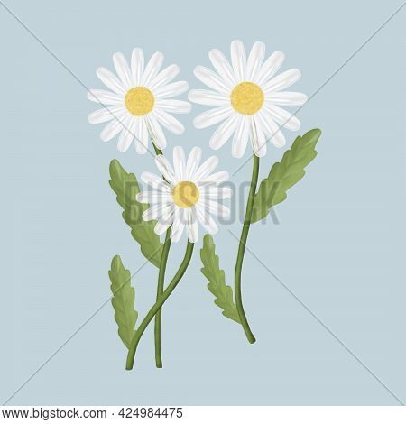 Illustration Of Three Daisies With Foliage On A Blue Isolated Background. A Bouquet Of Wild Flowers.