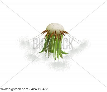 Realistic Dandelion Head With Few Seeds On White Background Vector Illustration