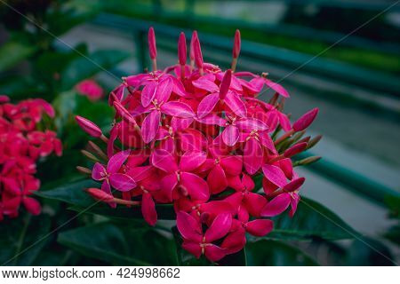 Close-up Of A Bunch Of Pink Spike Flowers