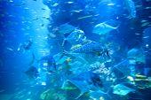 Fast moving fish in underwater aquarium poster