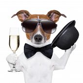 cheers dog with a glass of champagne and a black hat poster
