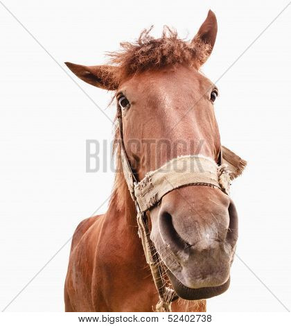 Funny Closeup Of A Horse - Wide Angle