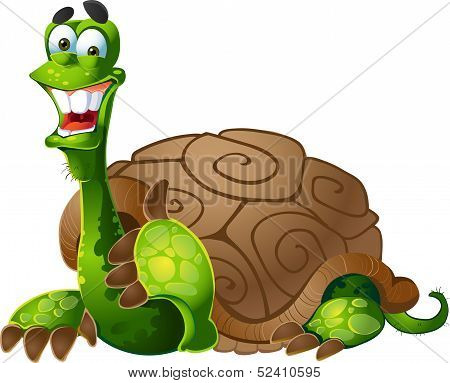 vector turtle on white background