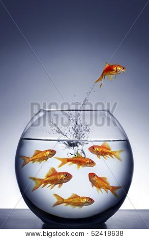 goldfish jumping out of the water from a crowded bowl