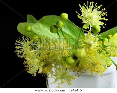 Linden Inflorescences In A Cup