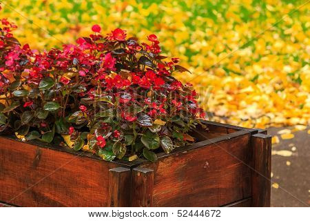 Wet Red Flowers From The Box On A Yellow Foliage Background