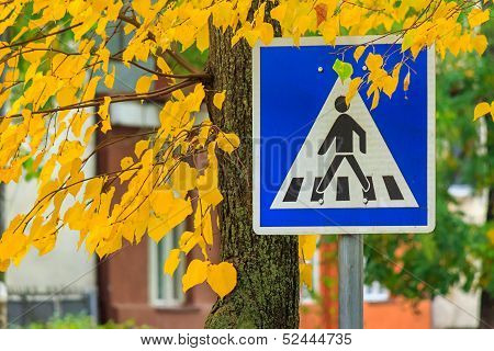Road Sign Crosswalk In The Yellow Leaves