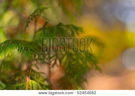 Leaves against the sky and a fir-tree in sun beams
