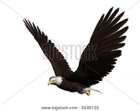 Eagleflyingnormal