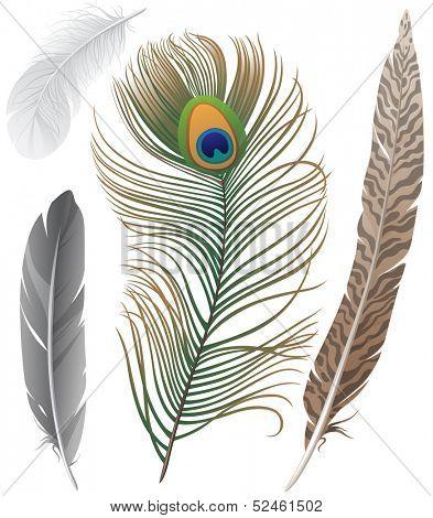 Close-up of 4 bird feathers
