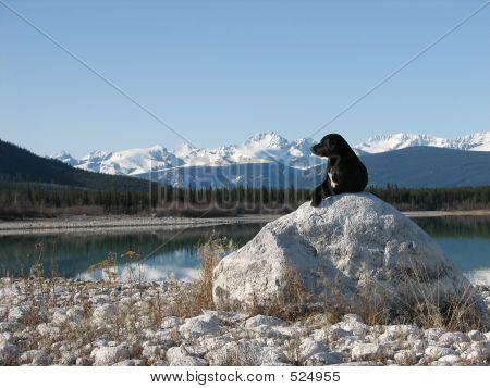 poster of dog enjoy the mountain view