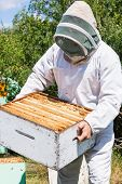 Male beekeeper in protective clothing carrying honeycomb crate at apiary poster