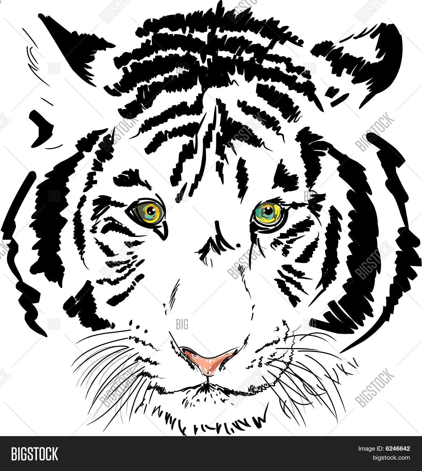 white tiger vector vector photo free trial bigstock
