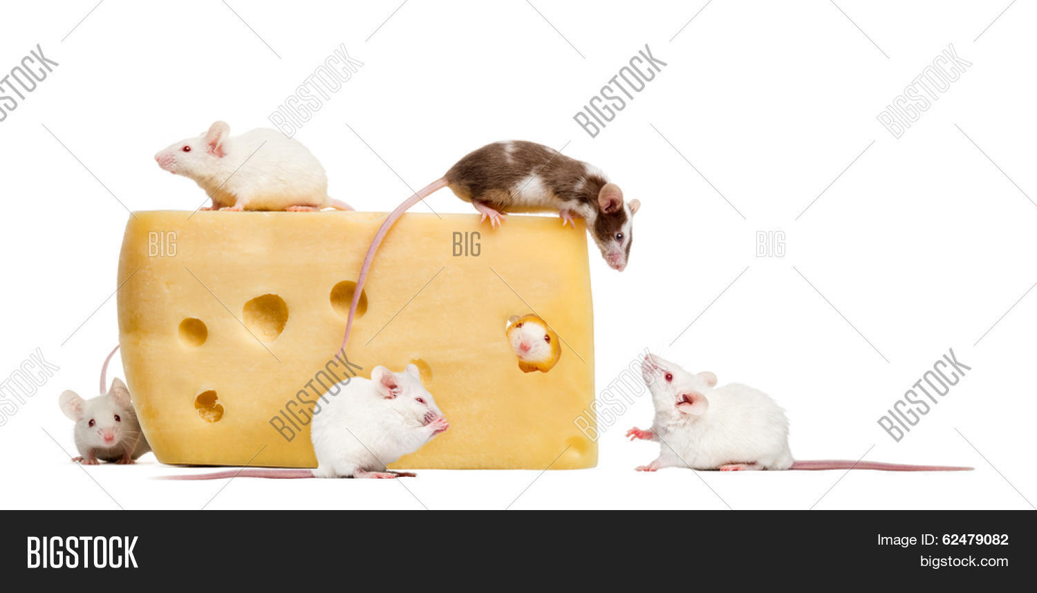 the mouse who ate the cheese Searched for 'mouse and cheese' and found 130361 results, download mouse and cheese songs and music videos for free , free mp3 and music video downloads - gosongnet beanie boo's: the cheese description : sorry i haven't made a video in a while this is just a funny, short video of an.