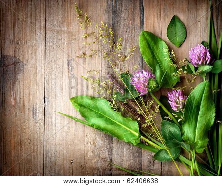 Herbs over Wood. Treatment Plant. Herbal Medicine. Spring Herbal Background. Grass