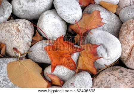 Autumn leaves on stone'spath