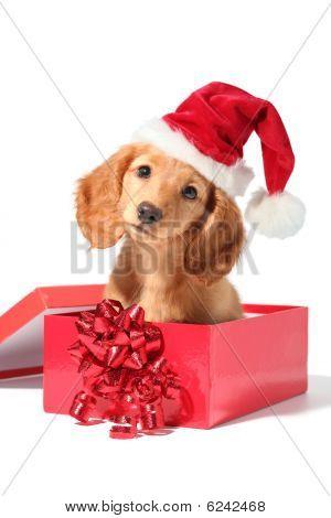 Santa Puppy