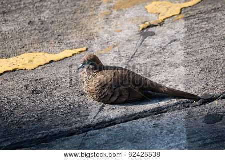 Injured Bird On A Street