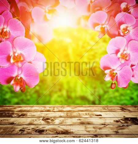 Spa, zen, wellness composition. Orchid flowers above wood rustic floor, tropical forest in sunshine light in the background